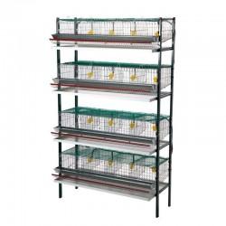 Cages Batterie pour Cailles
