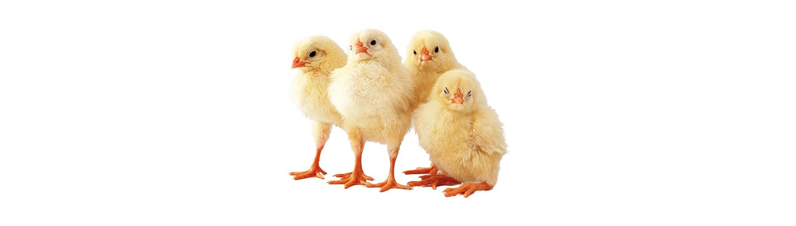 Fabricante de Productos para Avicultura Industrial