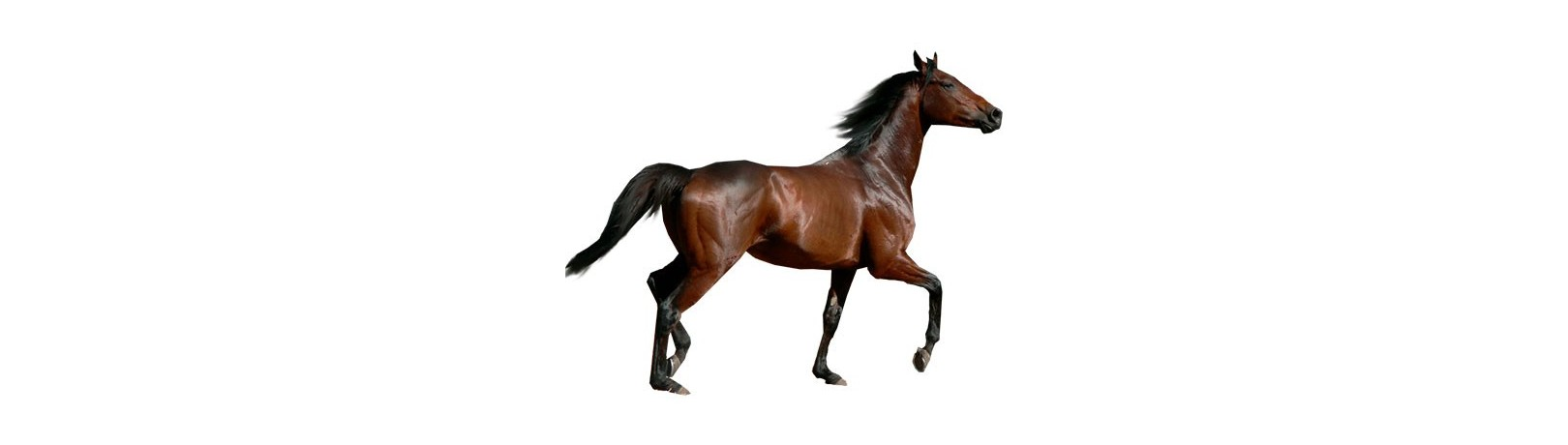 Manufacturer of Products for Horses