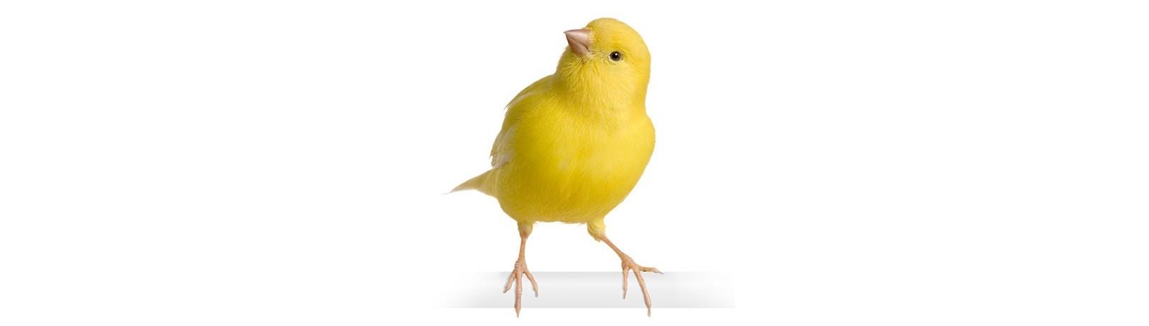 Fabricant de Produits pour les Oiseaux