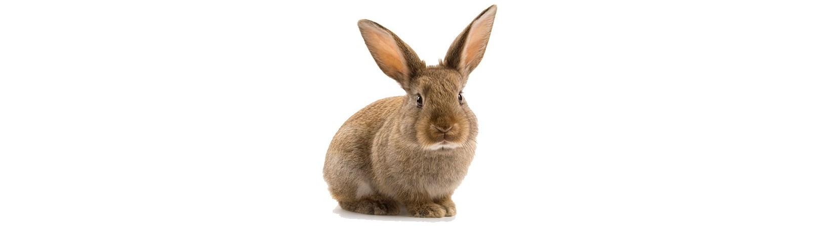 Fabricante de Productos para Conejos
