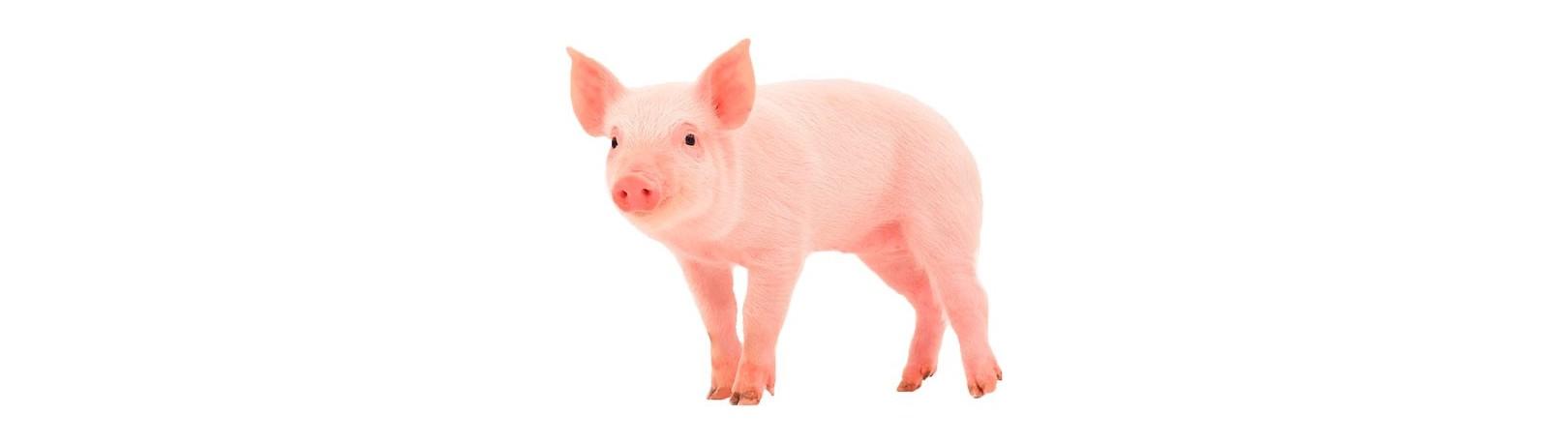 Fabricante de Productos para Cerdos