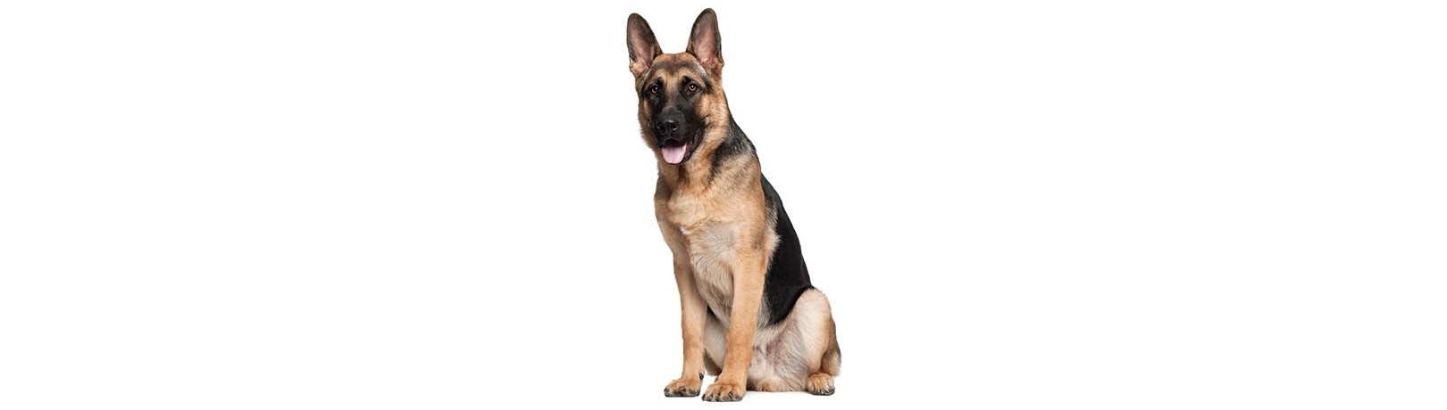 Residencias Caninas