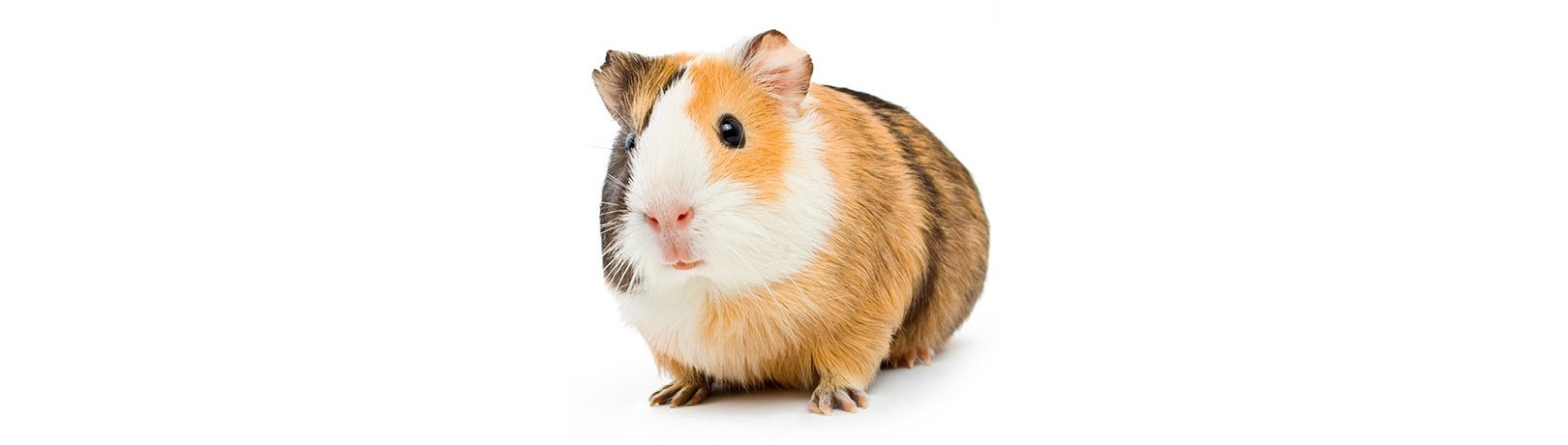 Hamster Products Manufacturer