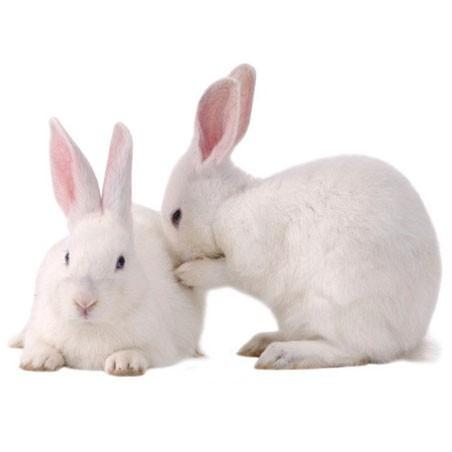 Industrial Rabbit Breeding