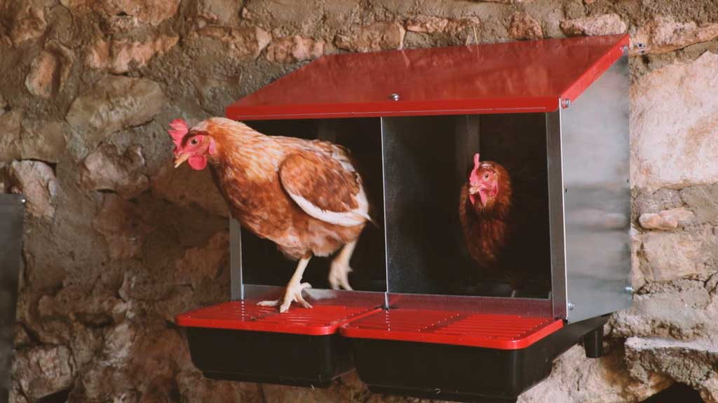 Ponedero para gallinas