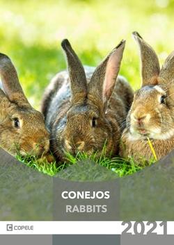Conejos PDF